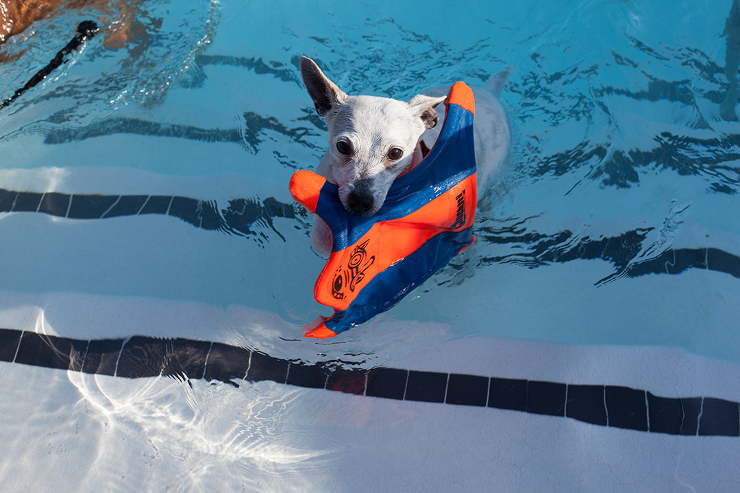 Doggie paddle human society event